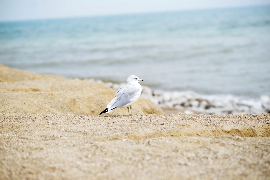 seagull-1149467
